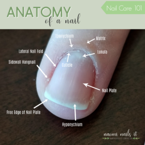 anatomy of a nail, anatomy of nails, nail parts, cuticle, free edge, sidewall, what is cuticle, cut cuticles, push cuticles, gelmoment, naomi nails it, gelmoment gel polish, nail care, manicure